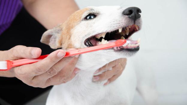 dog dental hygiene tips from regal veterinary clinic in spokane washington